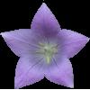 Virágzás Stimulátorok (40)