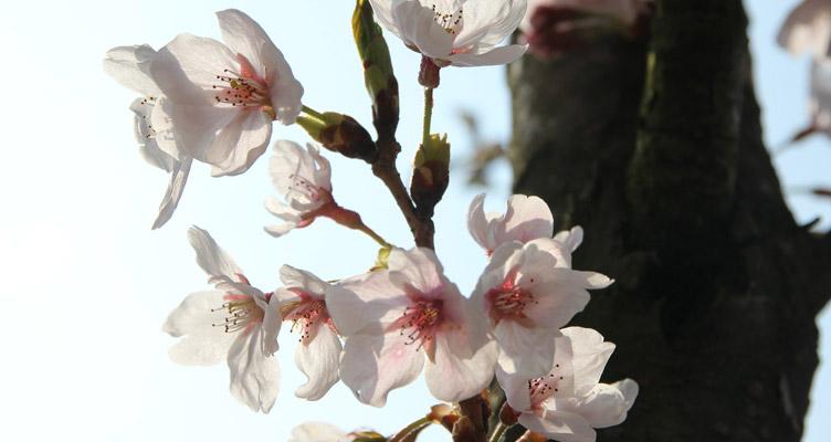 A cserepes növények gondozása áprilisban