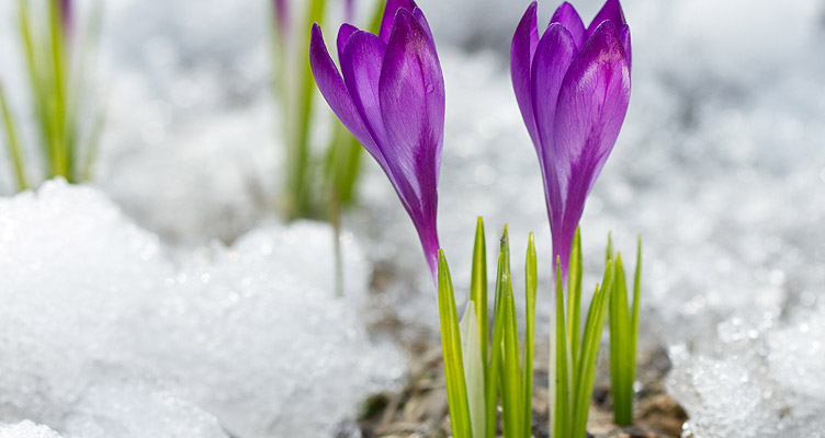Tippek kertészkedőknek – Február