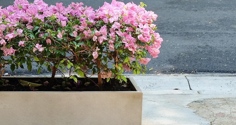 A cserepes növények gondozása februárban
