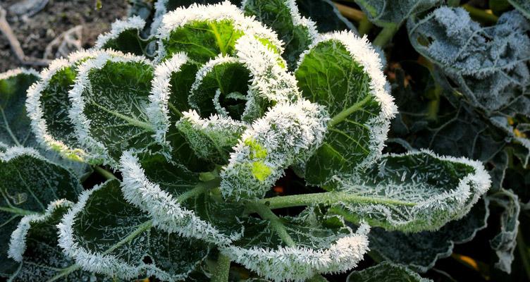 A télálló növények gondozása télen