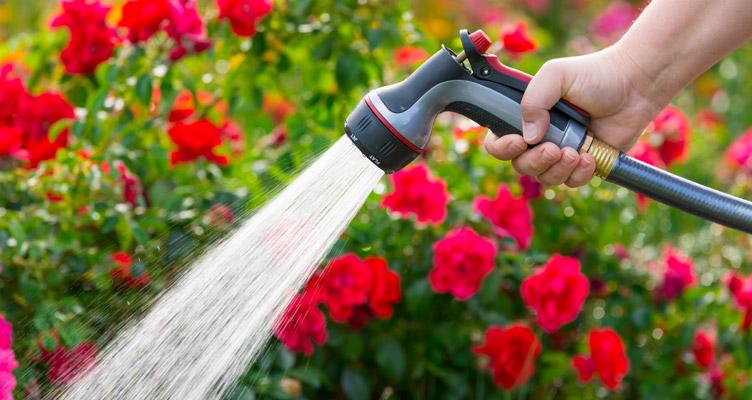 Tippek kertészkedőknek – Június