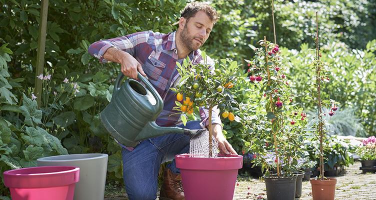 A cserepes növények gondozása júniusban