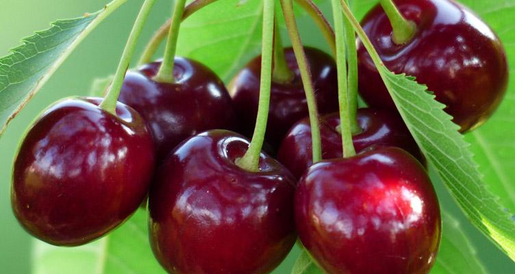 Gyümölcsök gondozása - Júniusi tippek