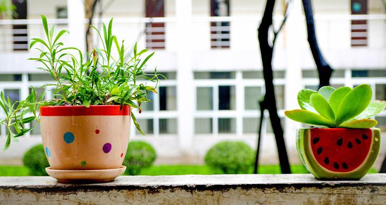 Növények a házban