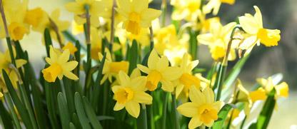 Kertészkedés márciusban
