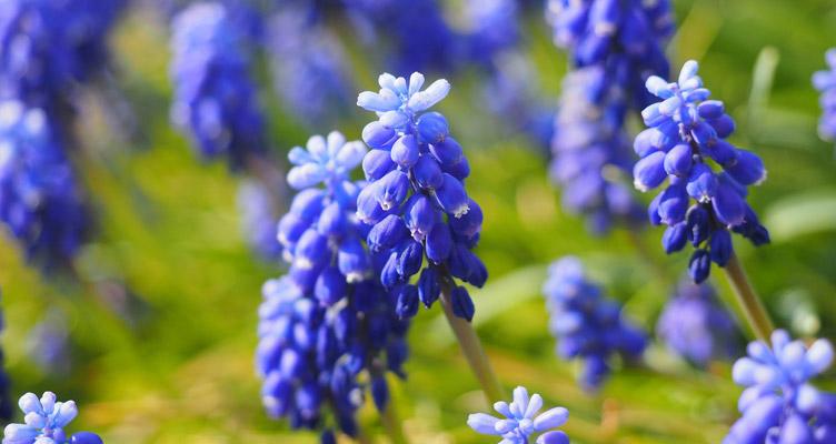 Tippek kertészkedőknek – Március