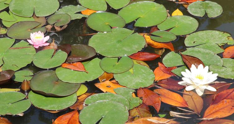 A kerti tó Szeptember