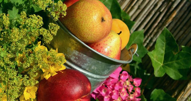 A gyümölcsfák nyári metszése