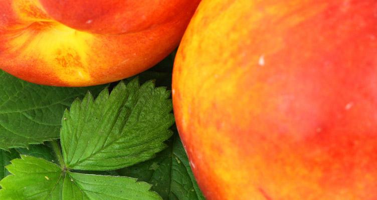 A nektarin metszése